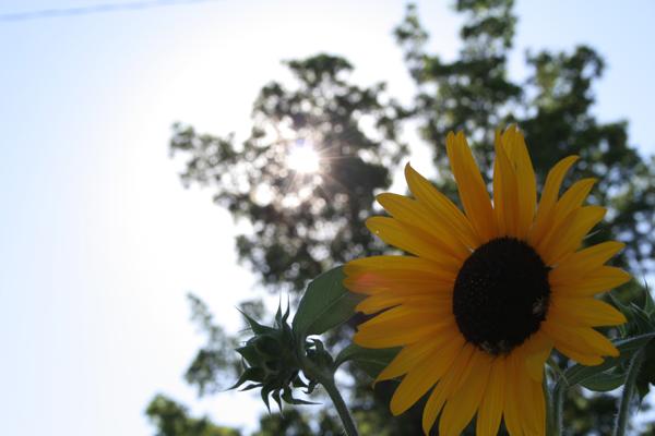 nature-artsy-still-life-0911